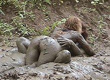 Mature mud sex